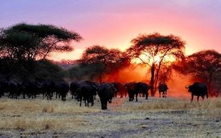 ray rui Impresiones de Africa Imágenes y Arte
